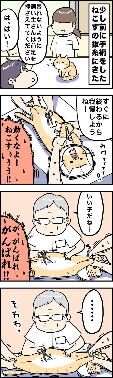 4コマ 抜糸