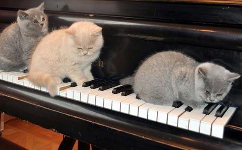 猫とピアノ