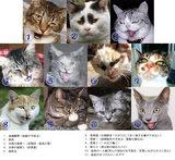 ネコ社会にも色々とあるのです
