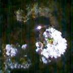 20050421_2350_001.jpg