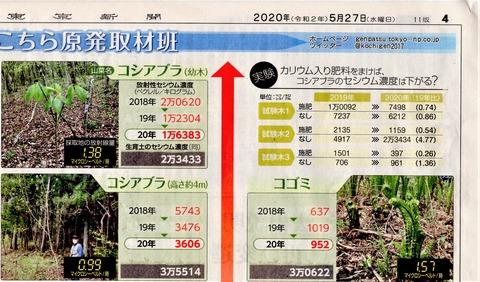 東京新聞20200527山菜汚染2