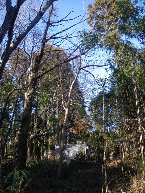 2021-01-09 11-09-15_0011枯れ木