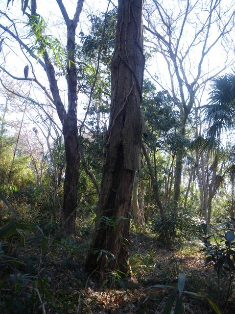 2021-01-09 11-08-00_0010枯れ木