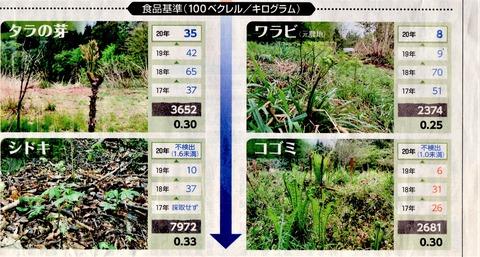 東京新聞20200603山菜汚染3
