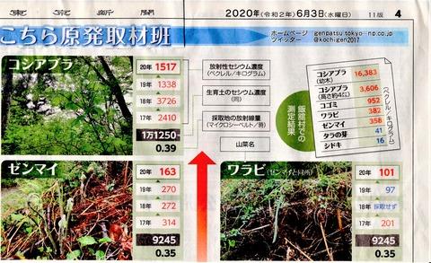 東京新聞20200603山菜汚染2