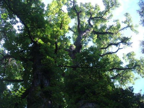 09114大きな木