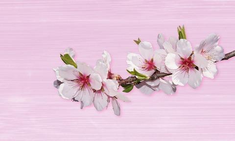 flower-3072620_960_720