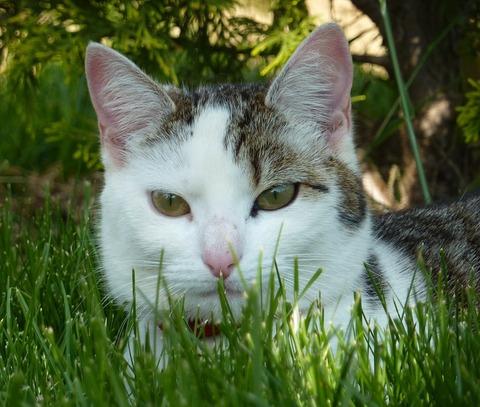 cat-3059504_960_720