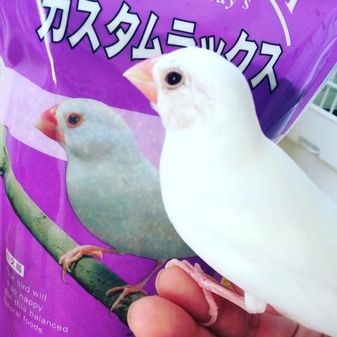 【エサの話】カスタムラックス完全移行