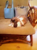 ソファーでくつろぐミルミルちゃん