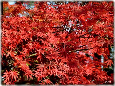 東京都立神代植物公園_05