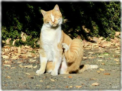 東京都立神代植物公園の猫