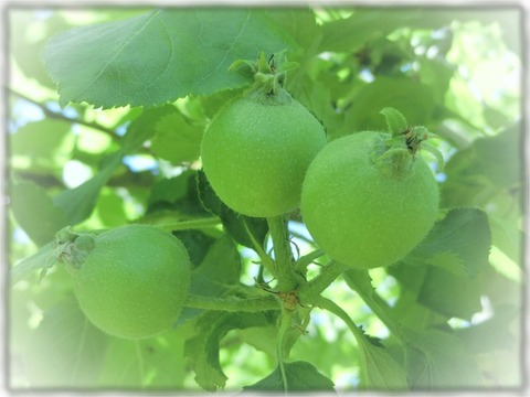 ニュートンのりんご