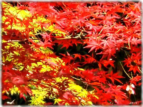 東京都立神代植物公園_08
