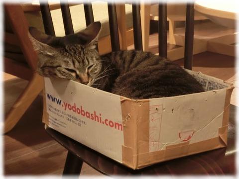 猫カフェきゃらふ