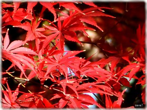 東京都立神代植物公園_07