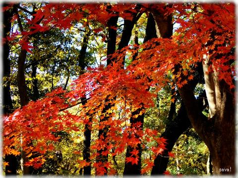 東京都立神代植物公園_04