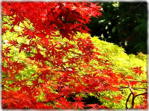 東京都立神代植物公園_09