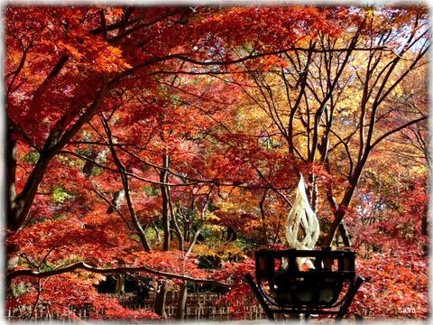 東京都立神代植物公園_10