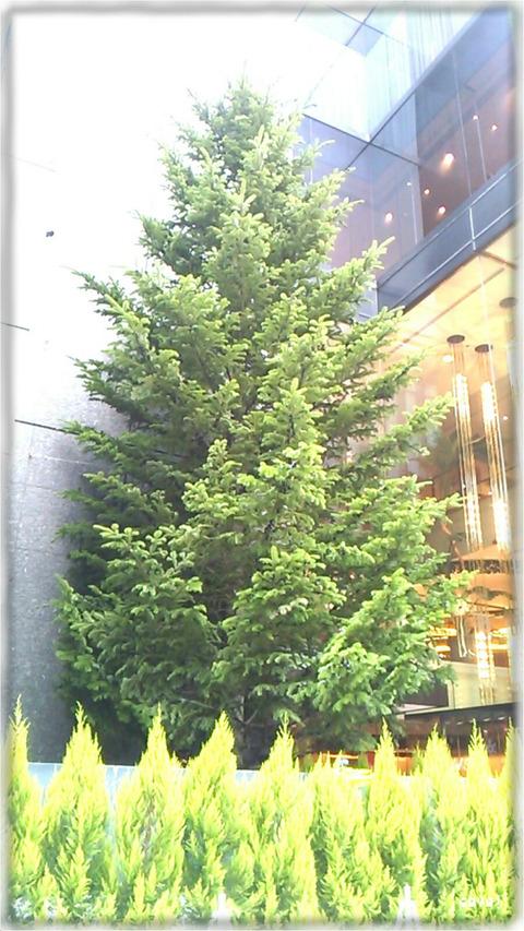ミキモトジャンボクリスマスツリー