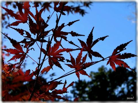 東京都立神代植物公園_01