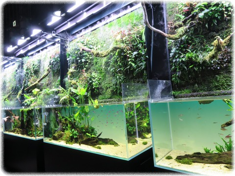 NATURE AQUARIUM展
