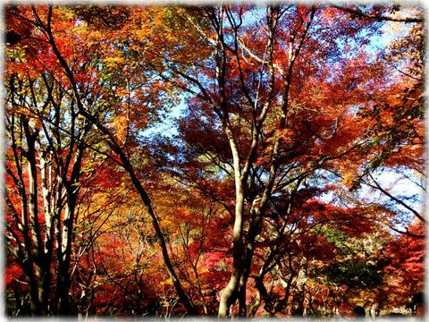 東京都立神代植物公園_03