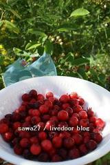 090518berry