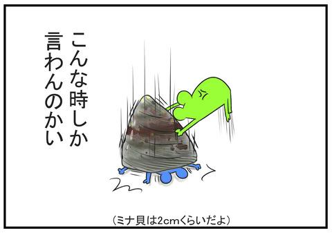H30.7.31 熱帯魚と貝 5