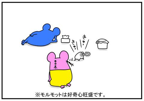 11 モルモット牛ちゃん 5