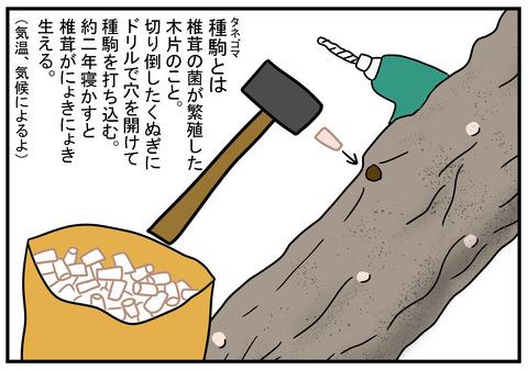 23 椎茸の種駒 1