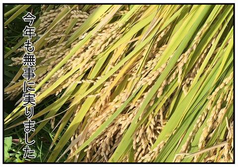 6 稲刈り当日 6