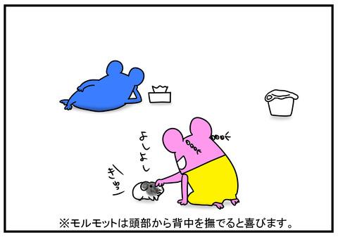 11 モルモット牛ちゃん 1