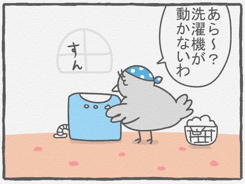 ハトぱっぱ36 1