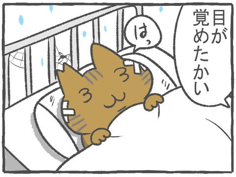 R2.10.16 ハトぱっぱ23 1