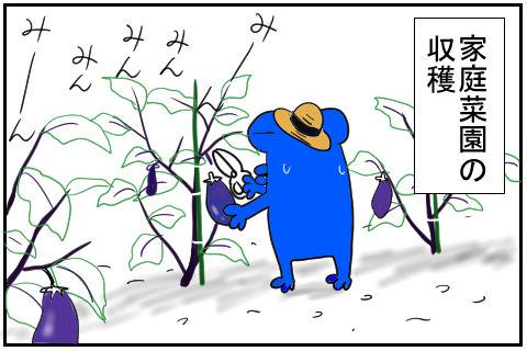 ナスの収穫