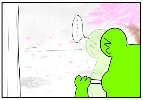 11 入学式と桜 5