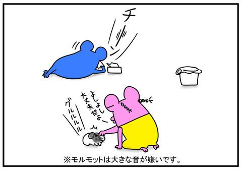 11 モルモット牛ちゃん 3