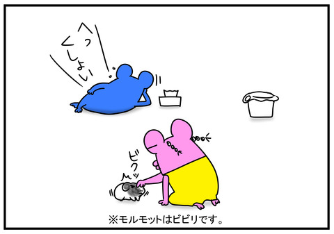 11 モルモット牛ちゃん 2