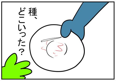 13 スイカの種 9