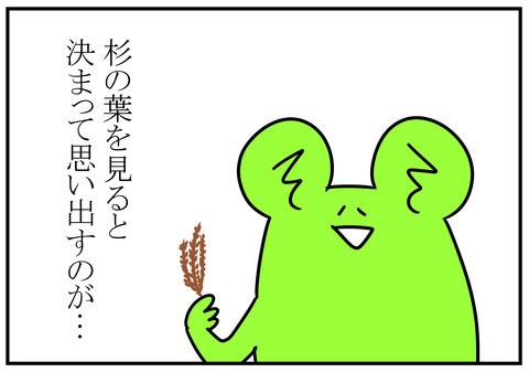 秋…杉の葉といえば 3