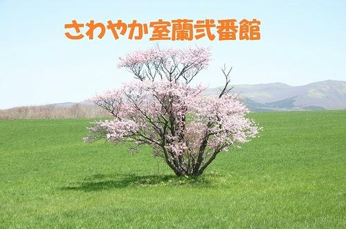 sakimori_02