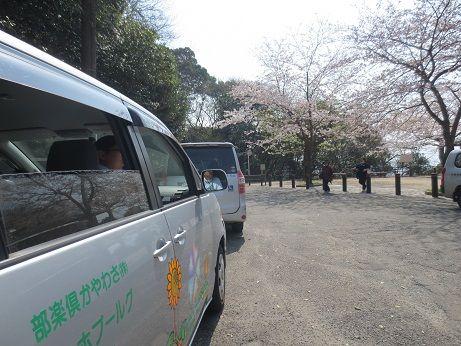アロママッサージ桜見物レク 129