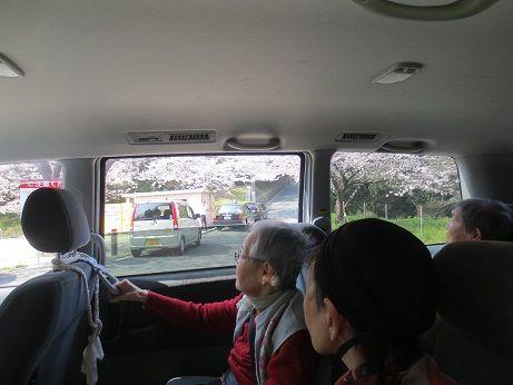 アロママッサージ桜見物レク 130