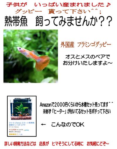 熱帯魚 飼って