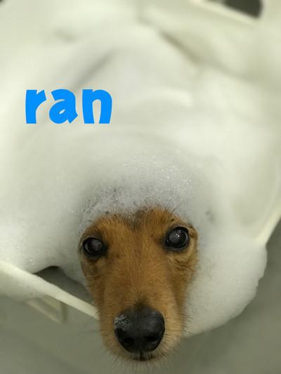 ran02