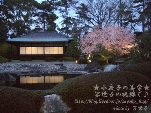 京都二条城ライトアップ2 (2009/04/06撮影)