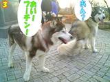 ボディーガード☆3