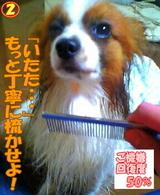 ブラッシング〜☆