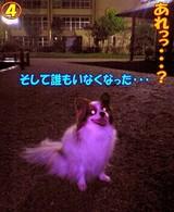 雨の日のお散歩☆4